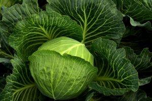 Cooking more sustainably at home | a cabbage | ulleo