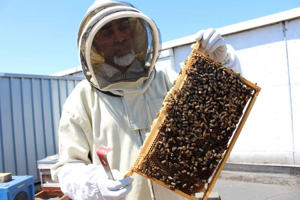 Khalil | Bushwood Bees