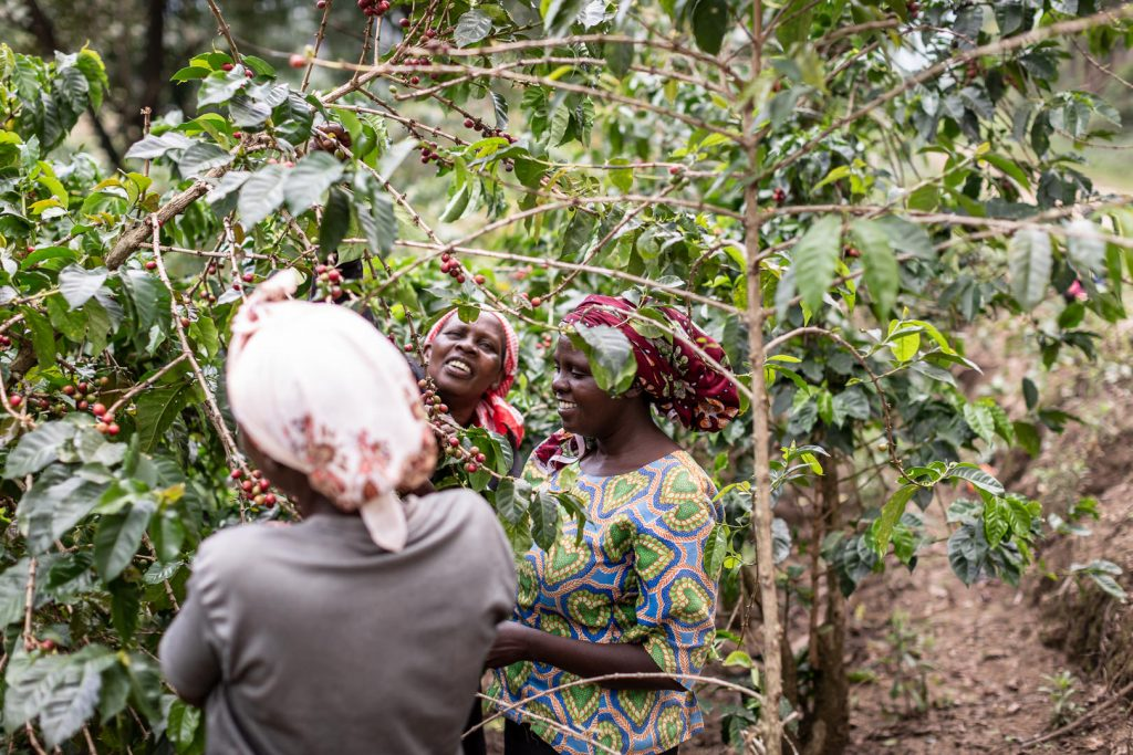 Women farming coffee cherries